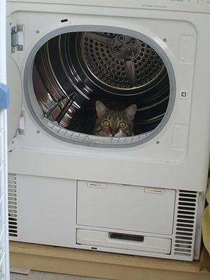 English: Cat in a clothes dryer Français : Cha...